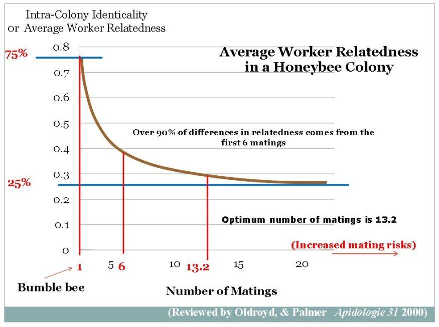 worker-bee-relatedness